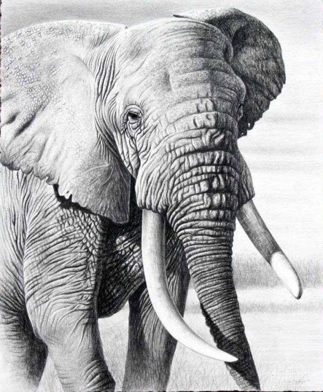 elephant animal drawings -  2