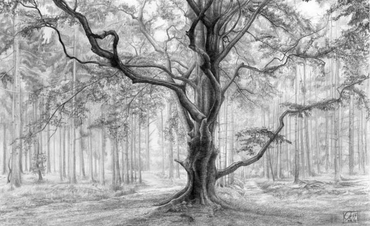 tree drawings -  20