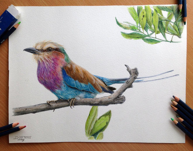 bird drawings by atomiccircus