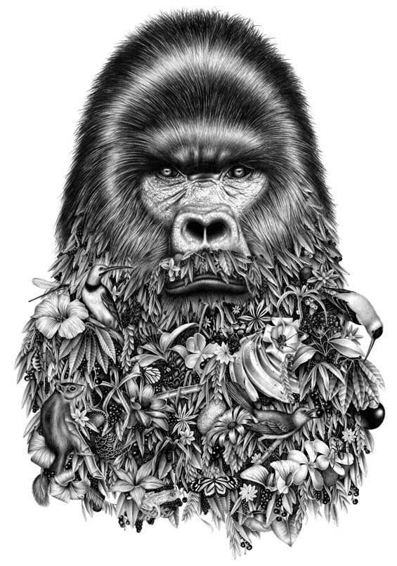 gorilla animal drawings by violaine jeremy -  21