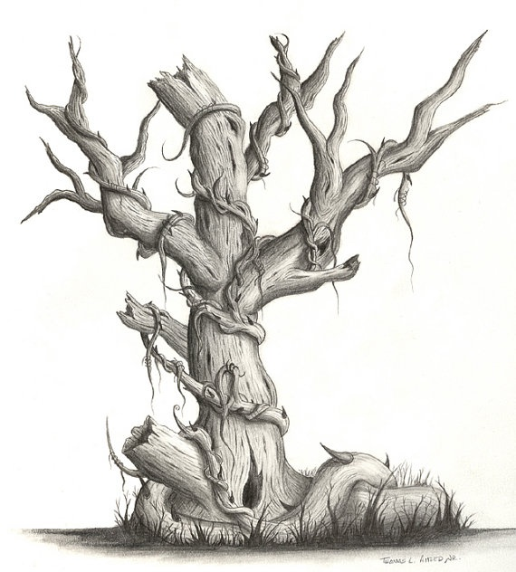 21 tree drawings