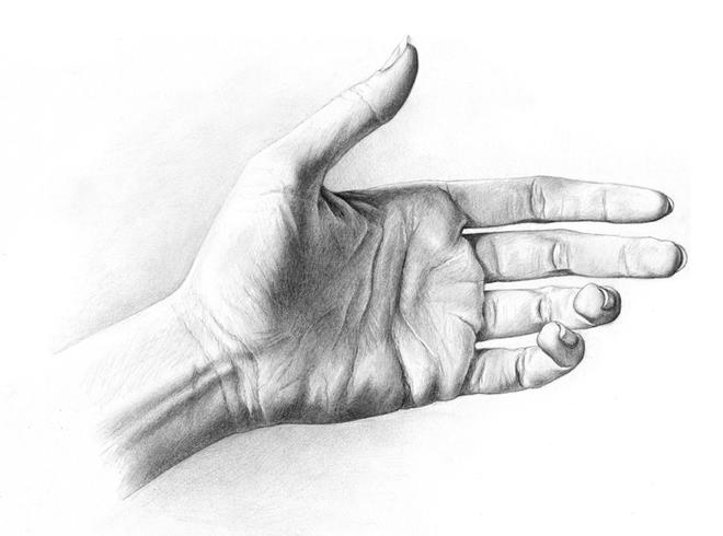 hand drawings by rowen silver -  24