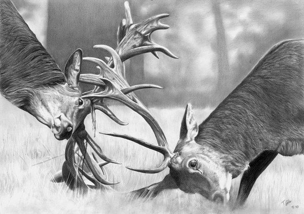 deer amazing drawings