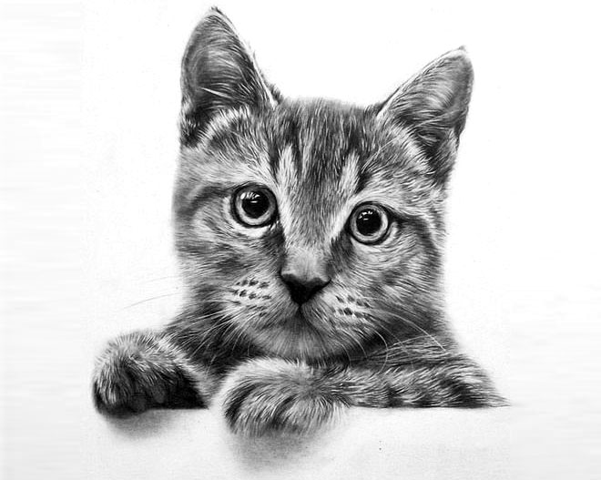cat drawings -  4