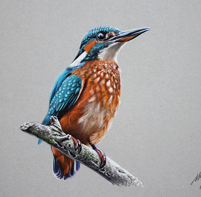 colourful bird drawings