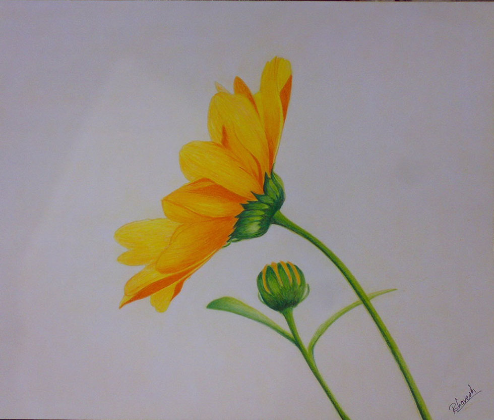 flower drawings by bhaveshnim -  6