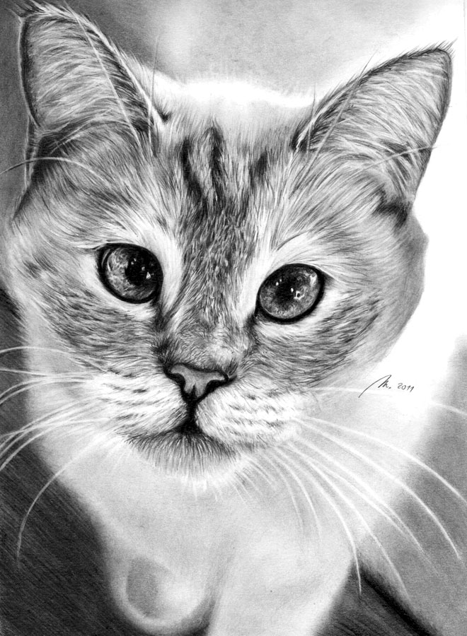 cat drawings -  8