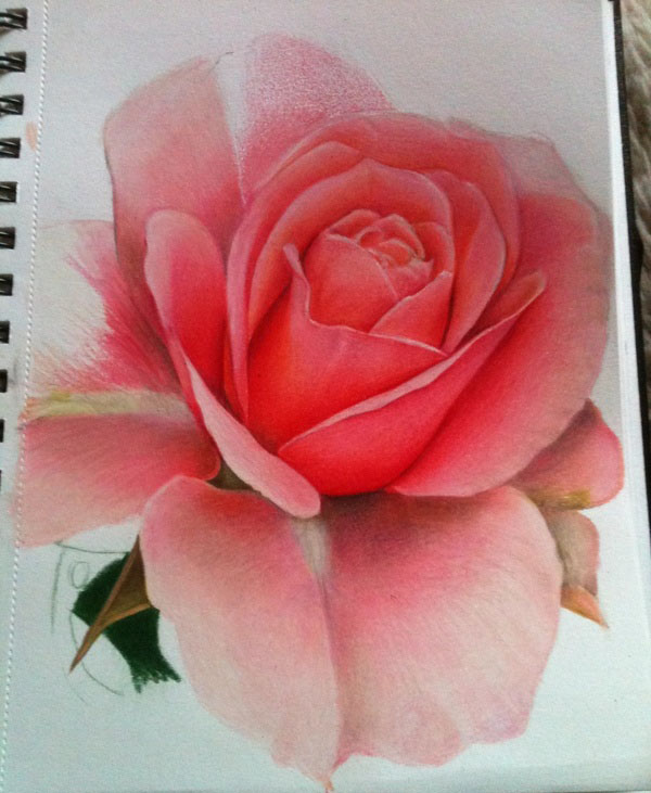 rose flower drawings -  8