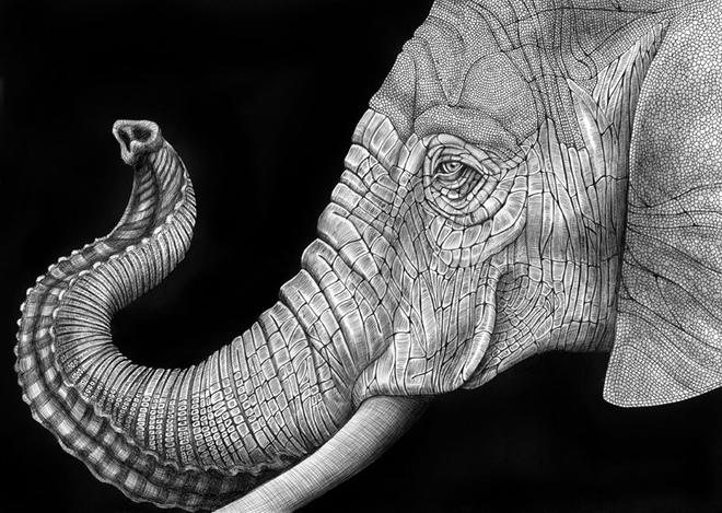 animal drawings by tim jeffs -  9