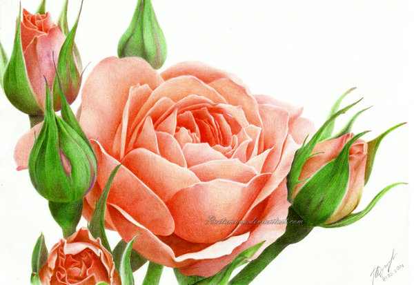 red flower drawings by rustamova -  9