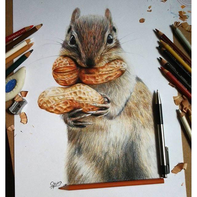 squirrel color pencil drawing by oscar guzmanhernandez