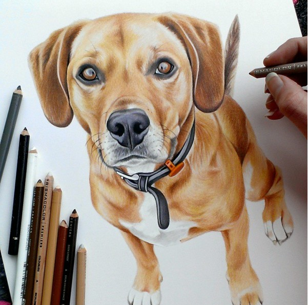 1 dog color pencil drawing by krystle missildine