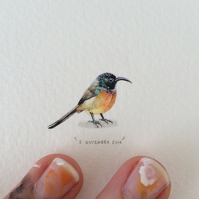 bird creative paintings by lorraine loots