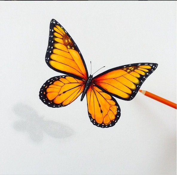 butterfly 3d drawings by leonardo pereznieto