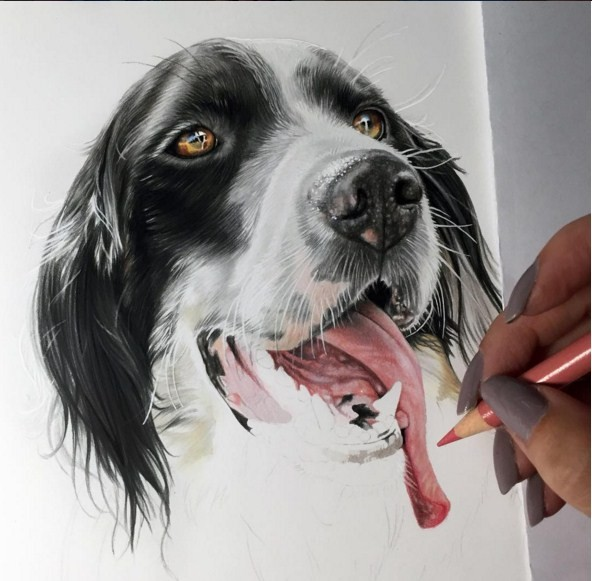 14 color pencil drawings by kelly lahar