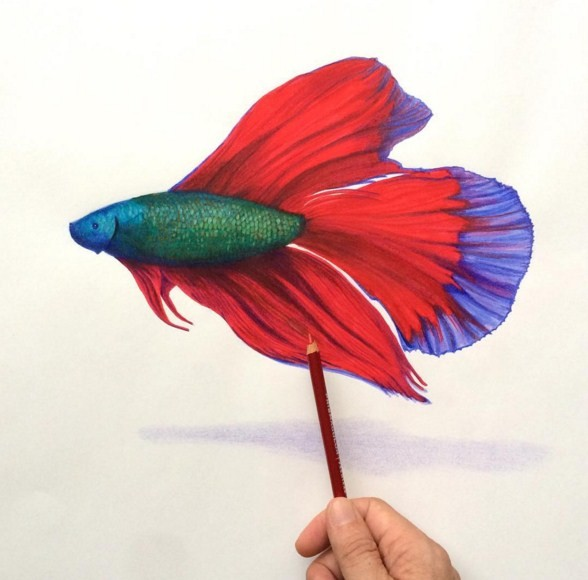 fish 3d drawings by leonardo pereznieto