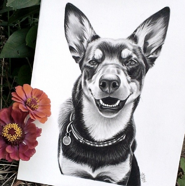 16 dog color pencil drawing by krystle missildine