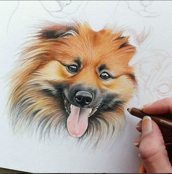 dog color pencil drawing by krystle missildine