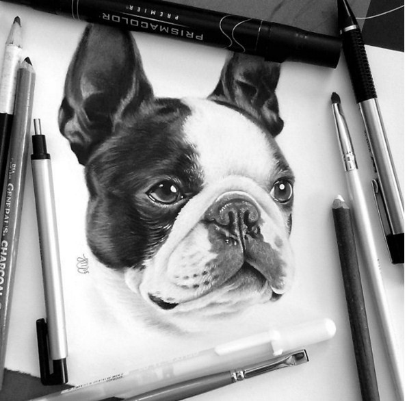 18 dog color pencil drawing by krystle missildine