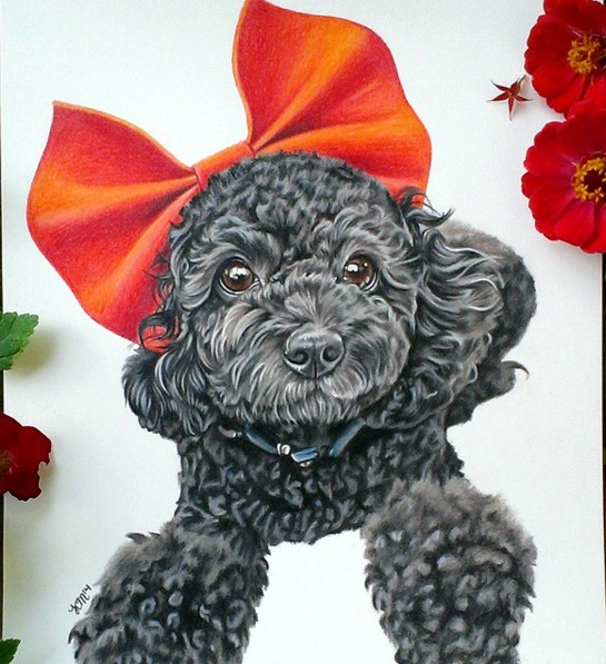 19 dog color pencil drawing by krystle missildine