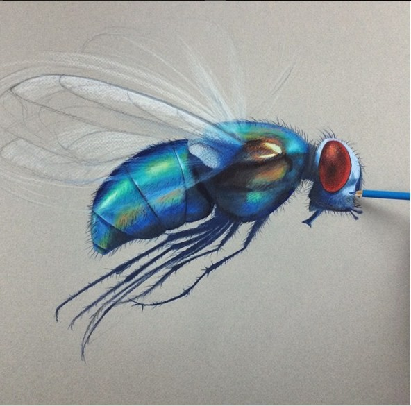house fly 3d drawings by leonardo pereznieto