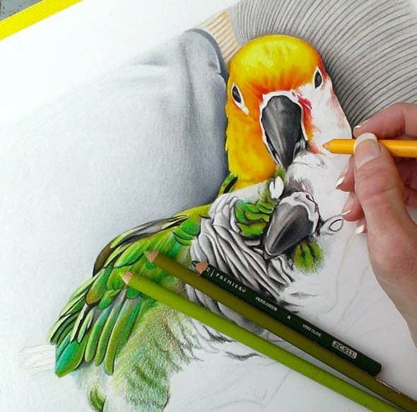 2 bird color pencil drawing by krystle missildine
