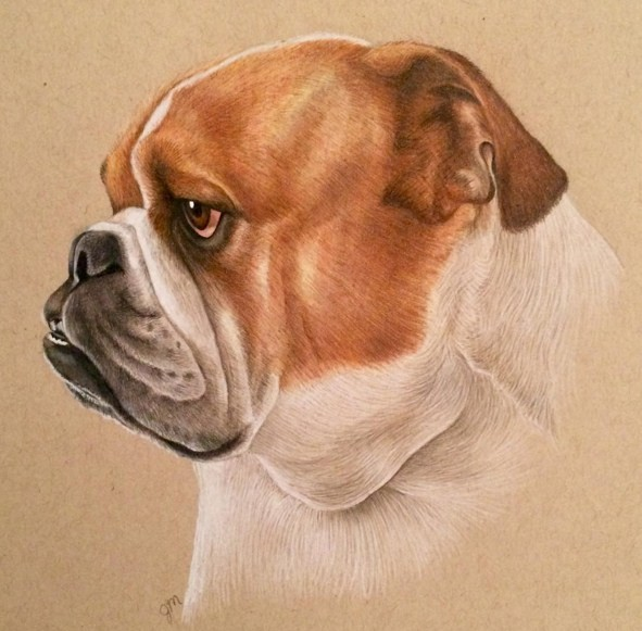 6 dog animal color pencil drawing by julianna maston