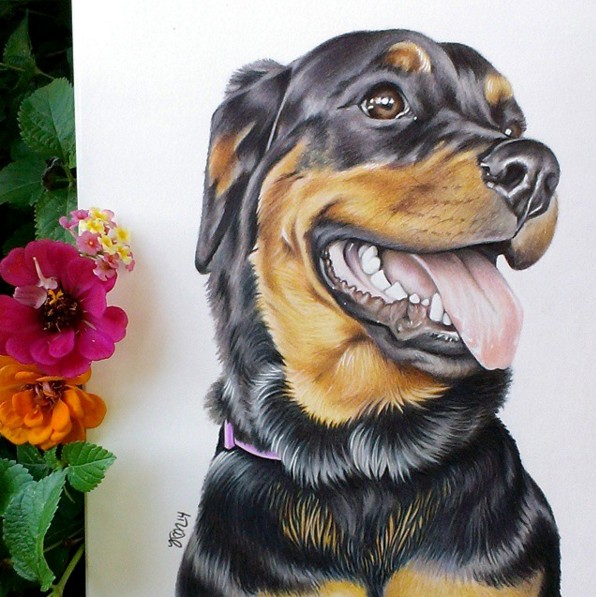 8 dog color pencil drawing by krystle missildine