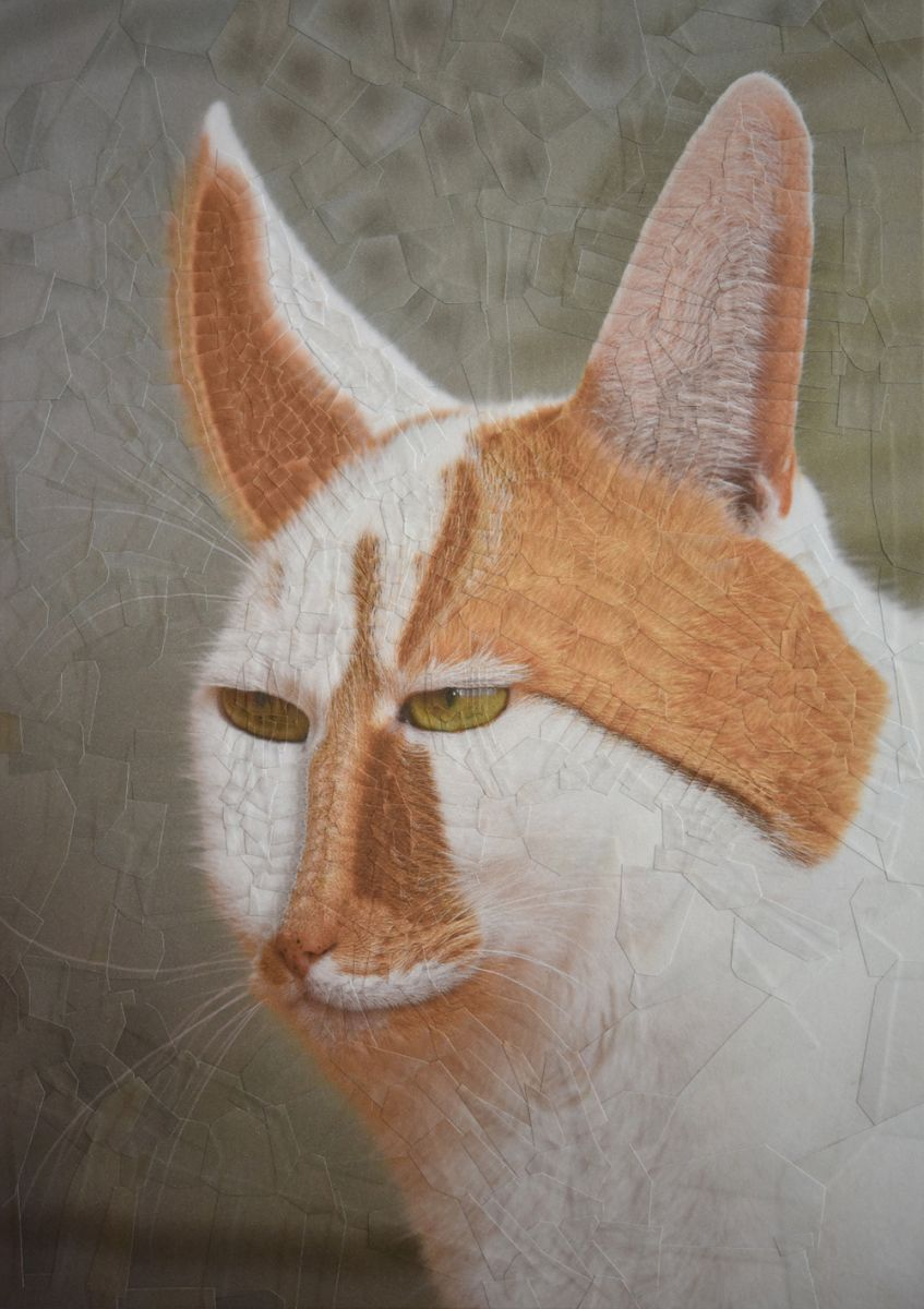 4 collage art work cat by lola dupre