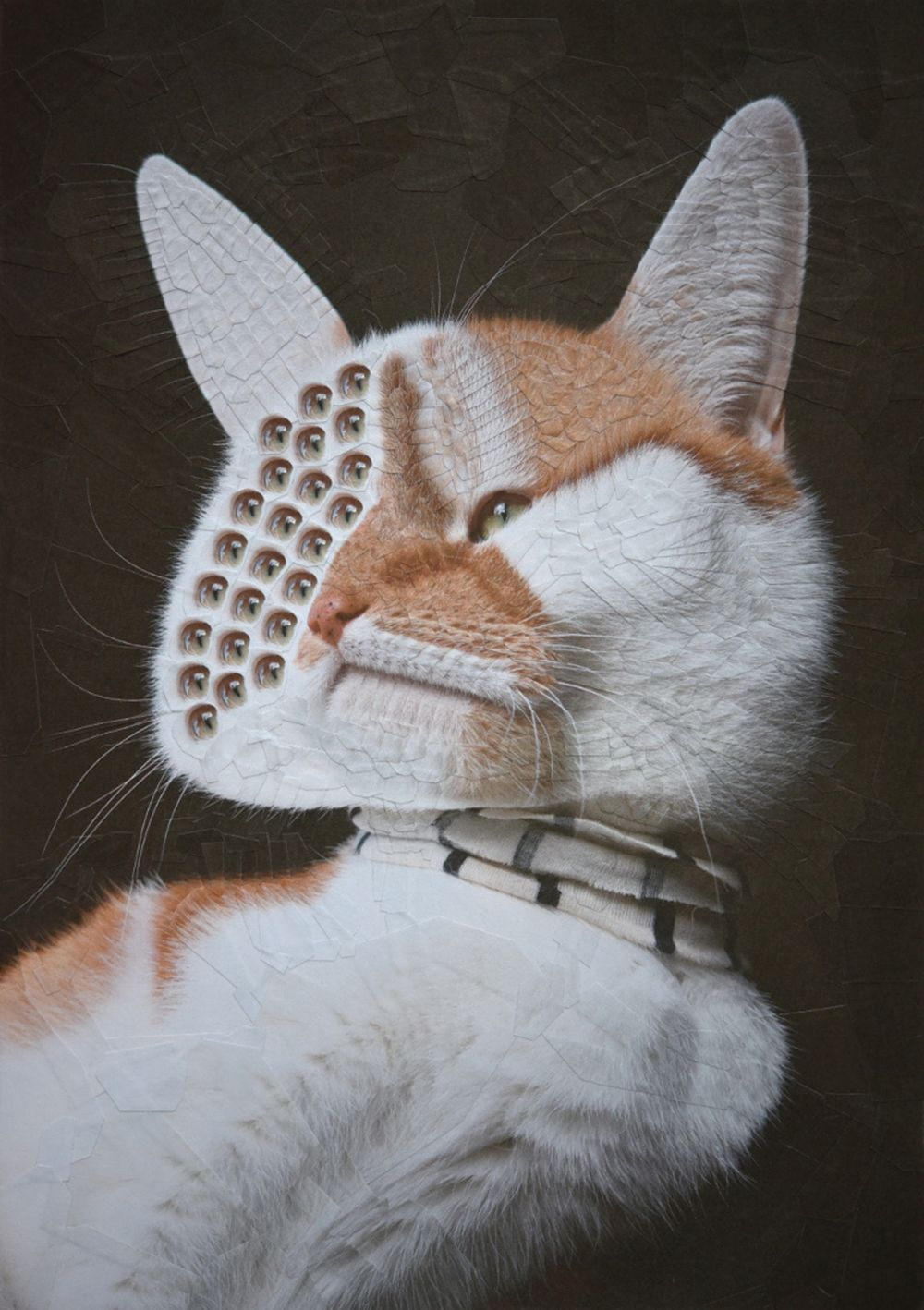 7 collage art work cat by lola dupre