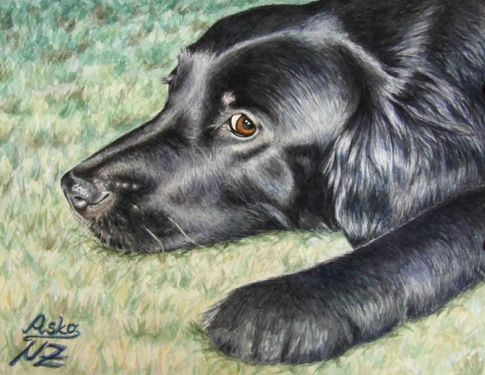 1 dog color pencil drawing nicole