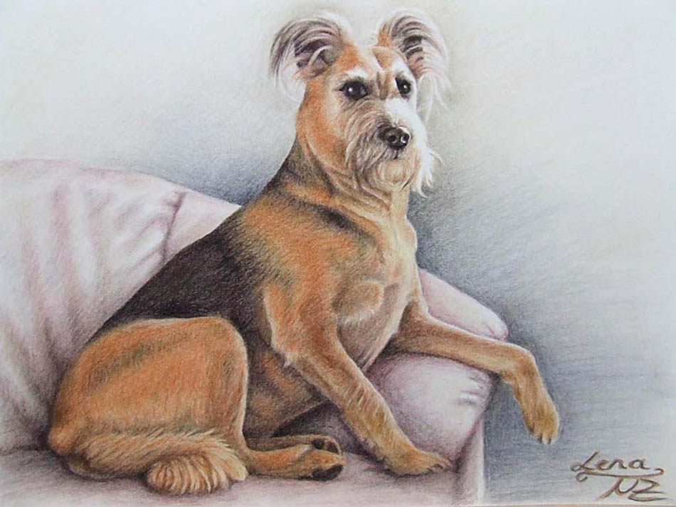 7 dog color pencil drawing nicole