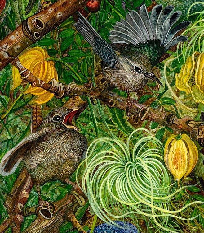birds illustration judy
