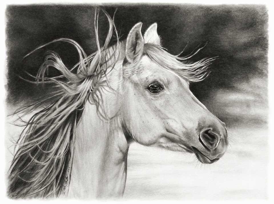 horse pencil drawing linda huber