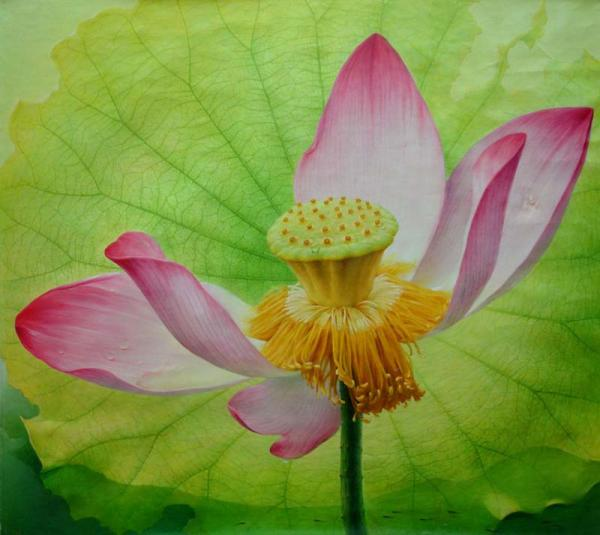 lotus flower painting jiang
