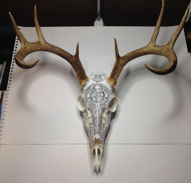 art skull animal drawings peter