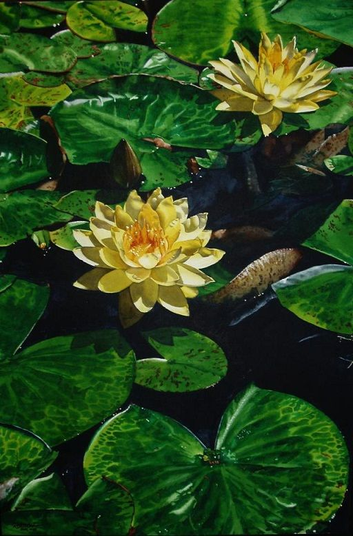 lotus-watercolor-paintings-marlin