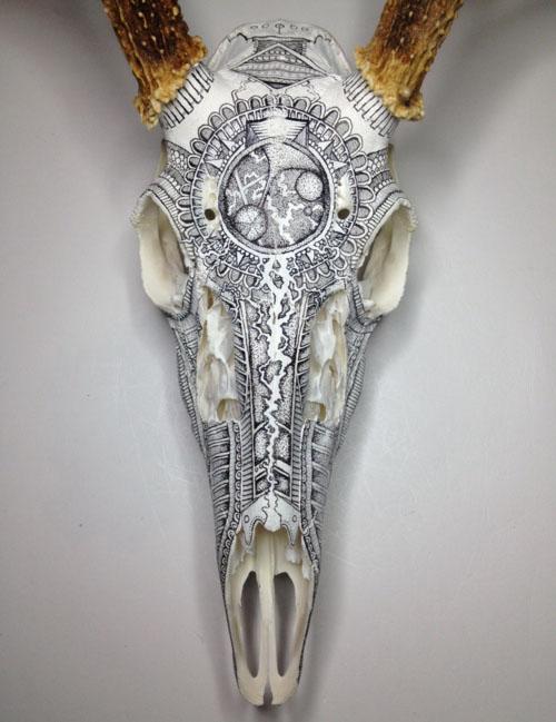 skull art animal drawings peter