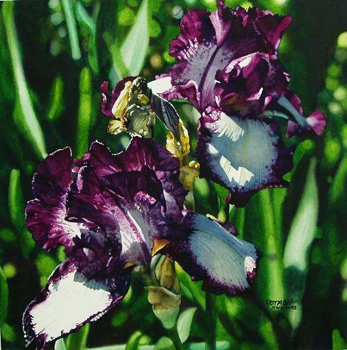 violet flower watercolor paintings marlin