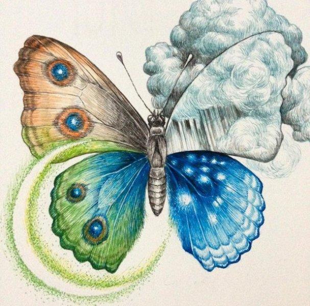 butterfly drawing by kozue