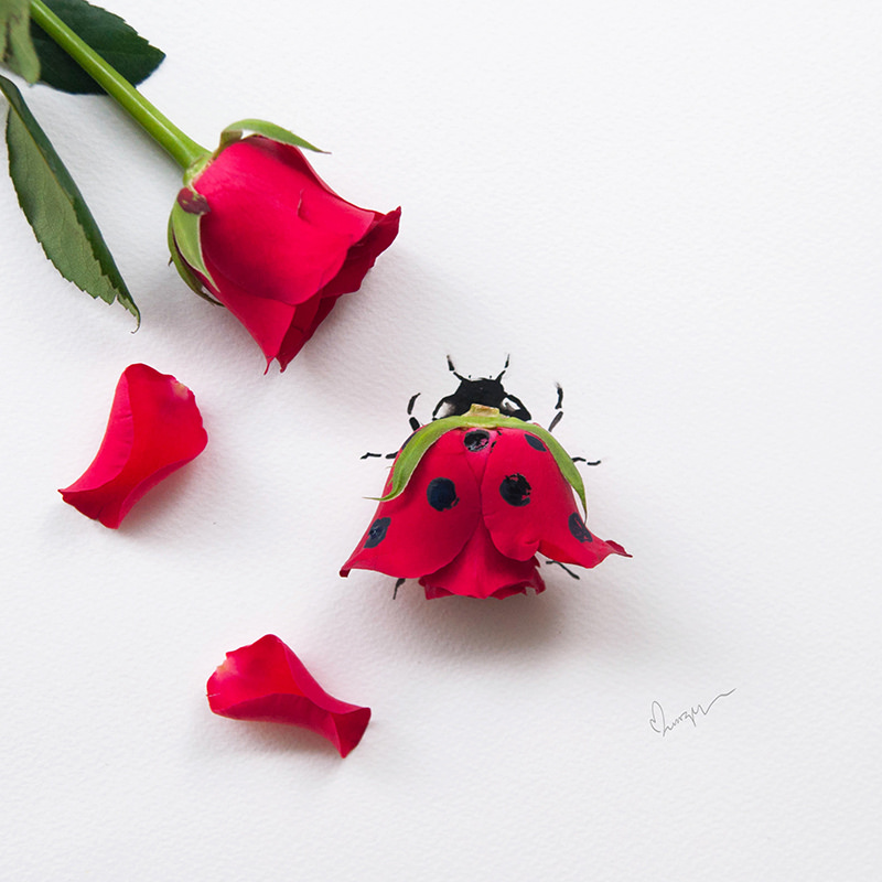 18 flower art by lim zhi wei