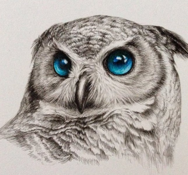4 owl drawing by kozue