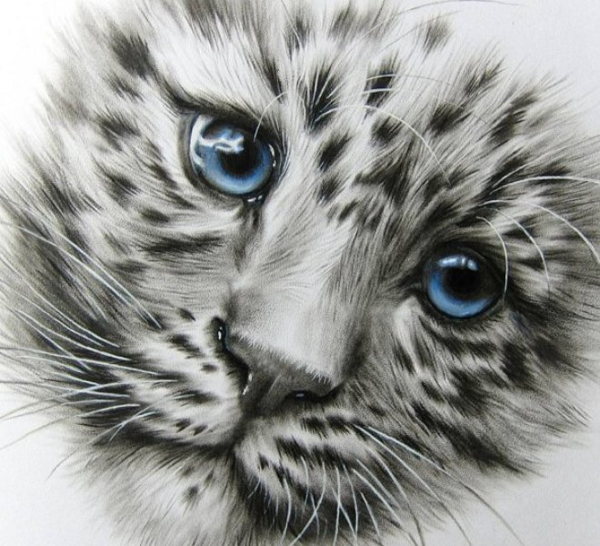 15 Beautiful and Realistic Animal Pencil Drawings by Kate Mur