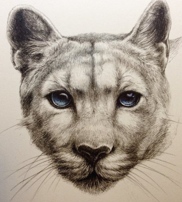 animal drawing by kozue
