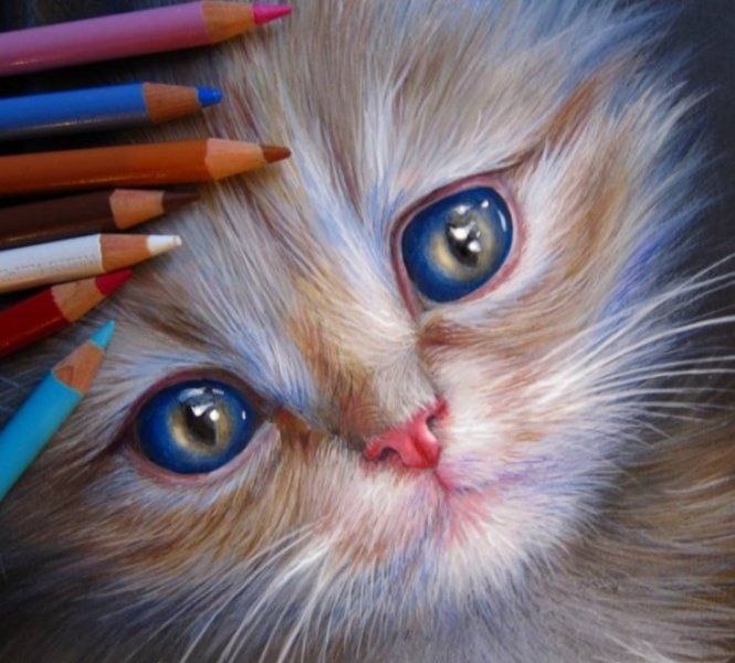 5 cat pencil drawing by kate mur