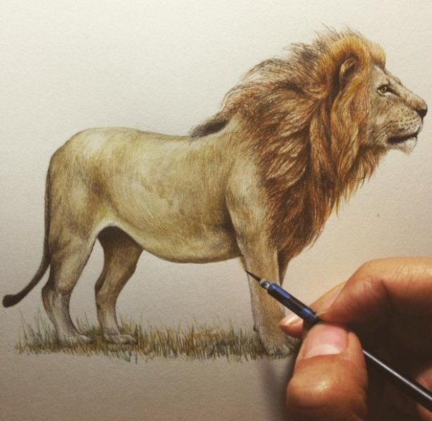 lion drawing by kozue