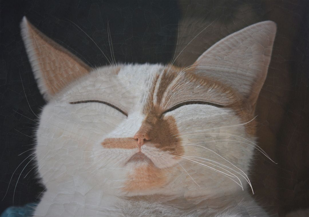 1 cat painting collage charlie by lola dupre