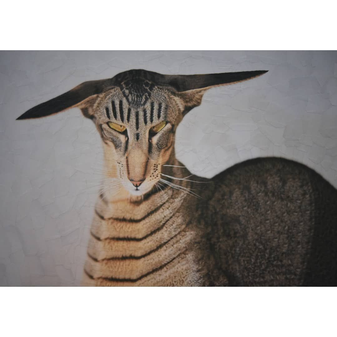 13 collage cat artwork hardy by lola dupre