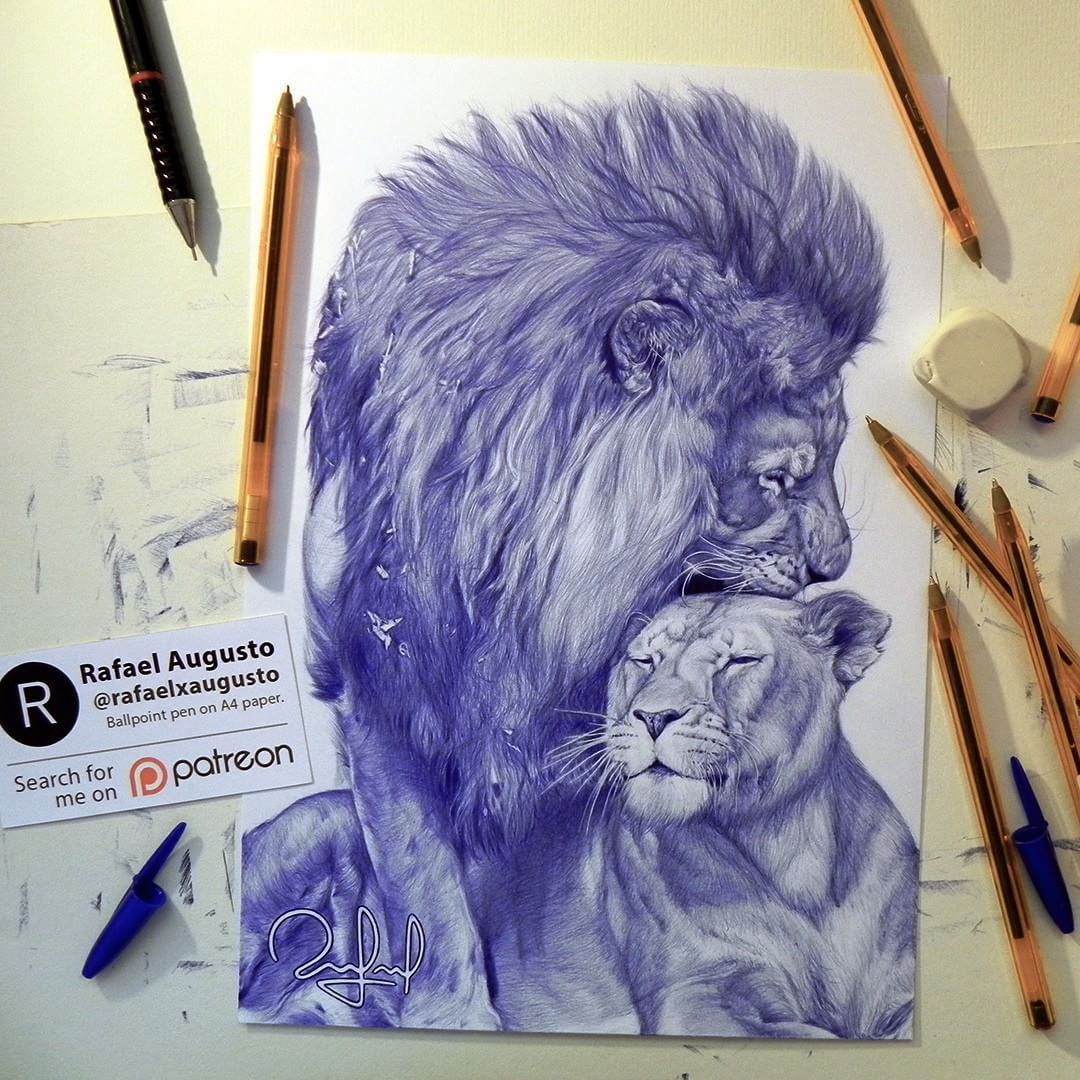 10 lion animal pen drawings by rafael augusto