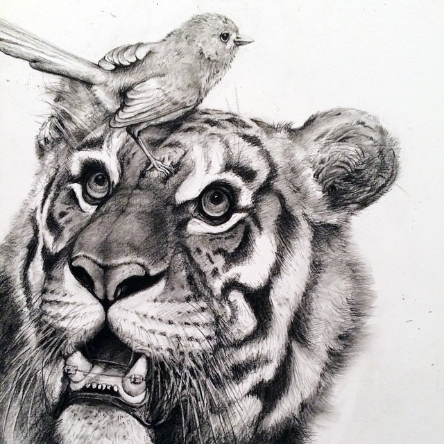 tiger animal pencil drawing by adonna khare